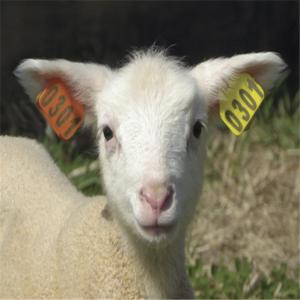 RFID UHF Animal Tag