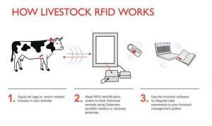 rfid cow tag system