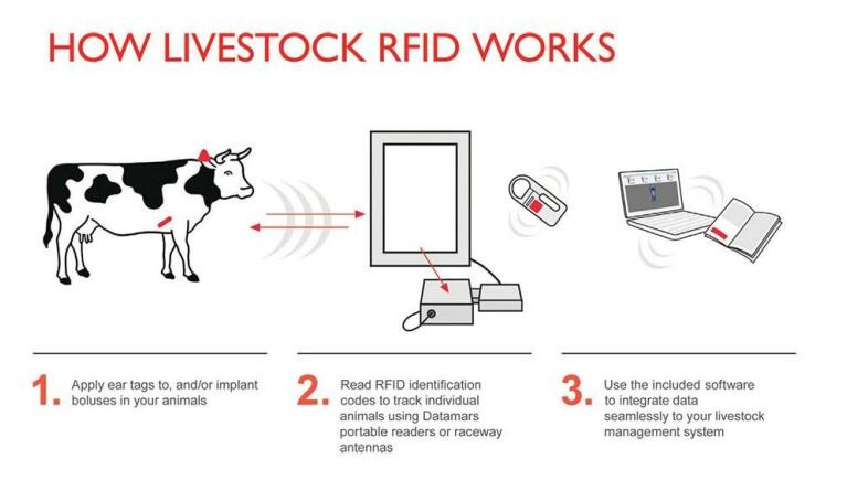 How Do Rfid Animal Tracking Effect On Animals Managerment