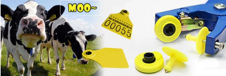 cow ear tags